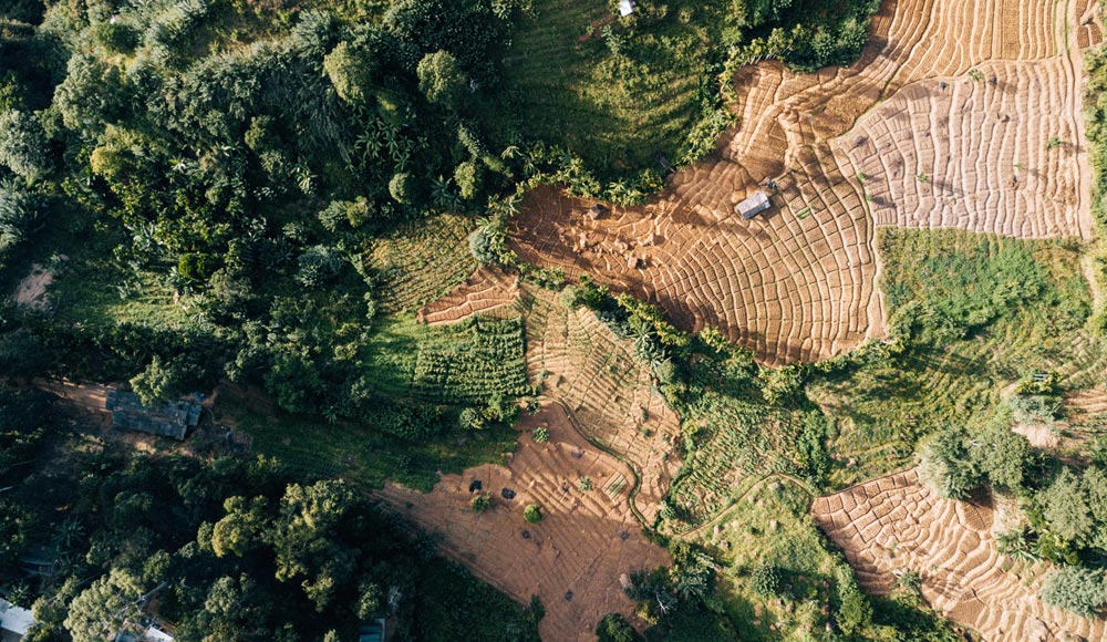 Consultancy services - earth observation, forests and agriculture